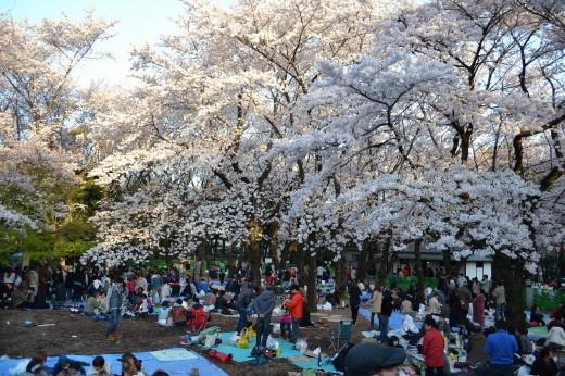 飛鳥山公園満員御礼の花見客!
